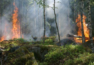 fire-jungle